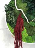 Картина из стабилизированого мха и растений MiNature Moss 60 см Рівне