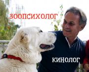 Зоопсихолог, кинолог - дрессировка, коррекция поведения и воспитание. Выезд на дом и оnline. Київ