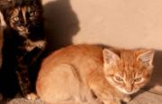 Кошеня котенок киця котик Івано-Франківськ