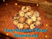 Інкубаційні Яйця Перепілок (Техаські білі | Фенікс | Фараон) Хмельницький