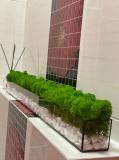 Моссариум з стабілізованим мохом Рівне