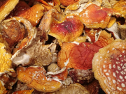 VIP шляпки Мухомора! Экологически чистые леса гор Карпат Ужгород