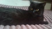 Безкоштовно котенята Житомир