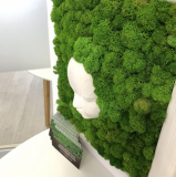 """Картина со стабилизированым мхом """"Лесная нимфа"""" 3D еффект MiNature Moss Рівне"""