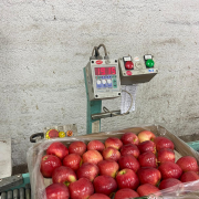 Продаем яблоки Київ